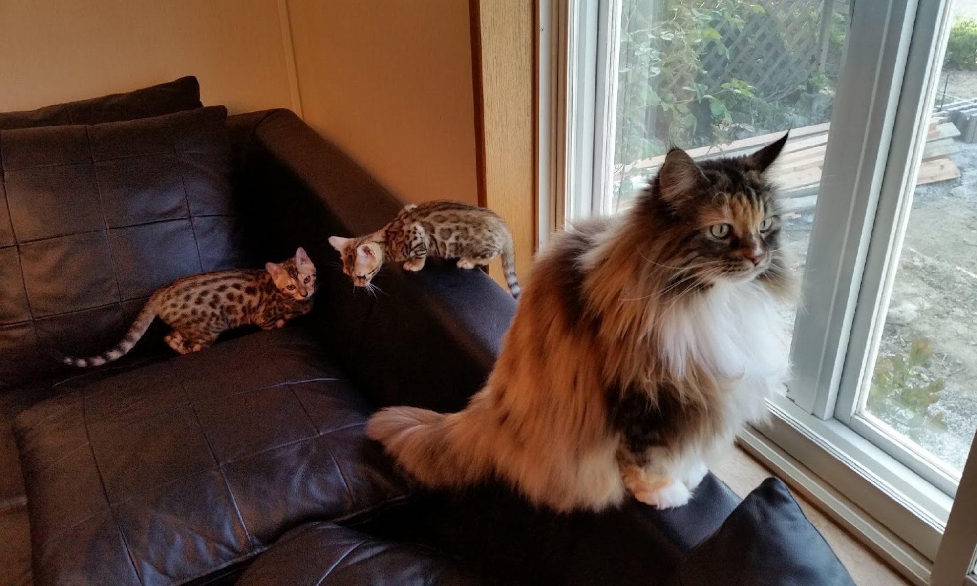 Cat Vacation